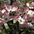 Blütenträume an Bäumen