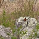 vogel im Shenandoah NP