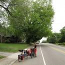 Straßenbäume ungeschnitten -und geschnitten