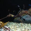 im Aquarium Ch.,