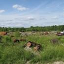 Landmaschinenfriedhof