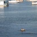 auch Seehunde hängen hier rum
