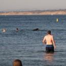 Seelöwen mittenmang dabei