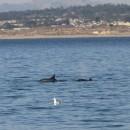 Delfine im Flachwasser