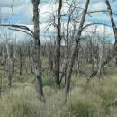 ein Waldbrand vor einigen Jahren - es wird sehr lange dauern, bis wieder Bäume wachsen