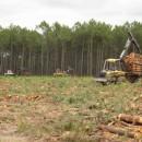 Holzernte. jede Minute fällt ein Baum