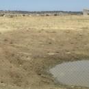Wasserloch auf Weide